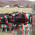 Cows1_lcows1_r_033_ca